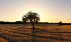 ¿Qué política cultural queremos para Extremadura?
